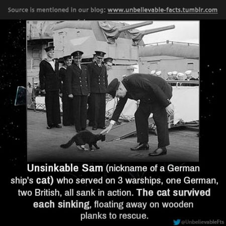 6 Funny Facts About WW2